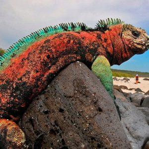 Tour a Galapagos Clásico