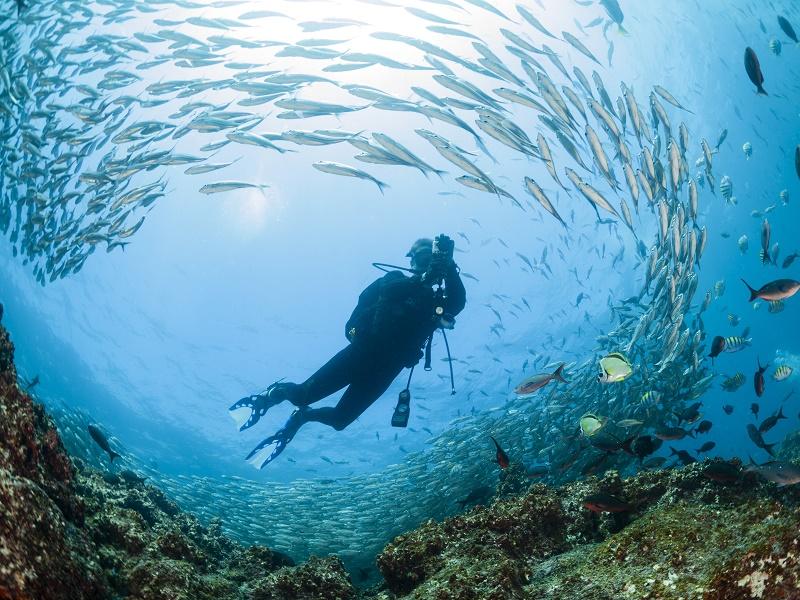 Tour islas Galapagos mas navegacion